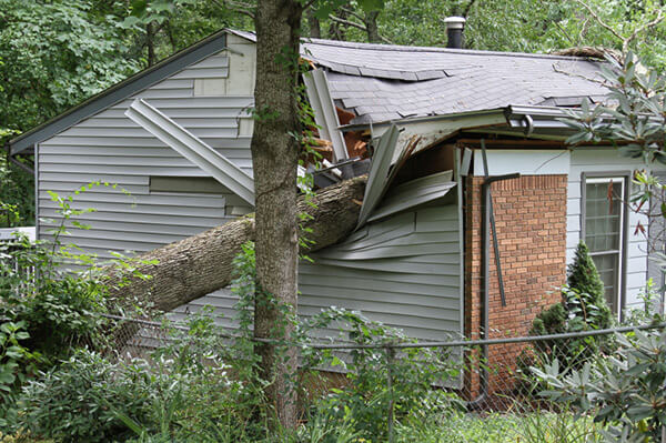Image Of Fallen Tree During Storm Damage Cleanup - Sure Kleen Restoration Services